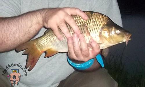Első hal